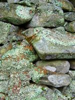 Stones and lichen, January 09